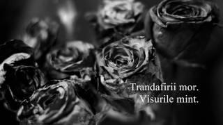 Tudor Gheorghe - Trandafirii mor