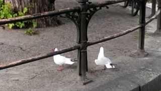Ситуации из жизни: Злые чайки кричат на берегу реки