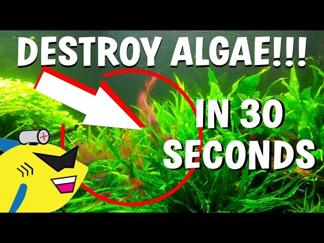 How To DESTROY Algae in 30 Seconds (Get Rid Of Aquarium Algae FAST)