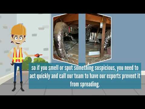 Same Day Service | Attic Cleaning Huntington Beach, CA
