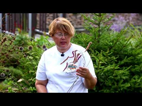 Ваш сад №60 - В гостях у Елены Троян