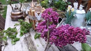 Flieder Flieder Flieder, Farbenpracht & Deko Glas für Haus und Garten...