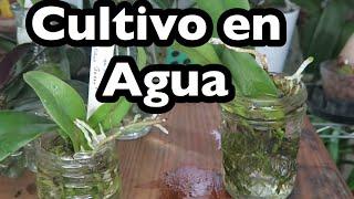 Todo Sobre Cultivo En Agua