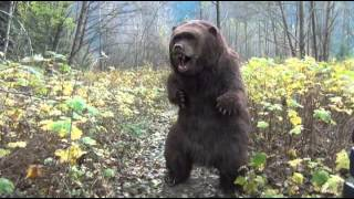 Animatronic Bear Suit By SFX Studio Inc. Available for rental