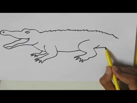 How to draw a Crocodile - in easy steps advanced drawing lesson.