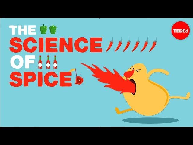 Kenapa Lidah Kita Terasa Pedas Ketika Makan Cabai
