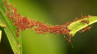 Unity of Ants & Team-Spirit