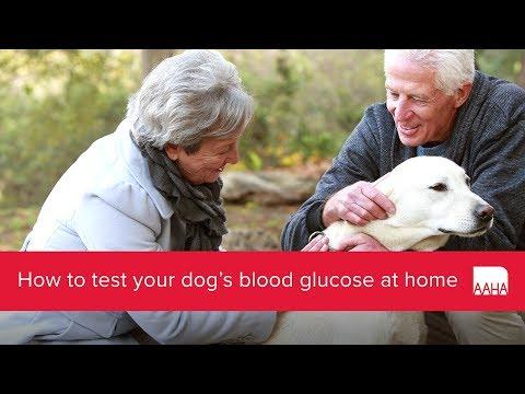 Analiza prin insulină ridicată