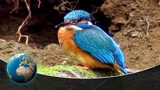 The Kingfisher - Germanys Flying Diamond