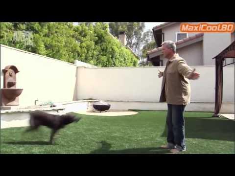 Порода собак - Тайский риджбек