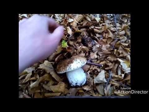 Che spalmare a un fungo di dita del piede