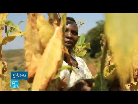 العرب اليوم - شاهد: أمراض خطيرة يتعرض لها الأطفال في ملاوي بسبب زراعة التبغ