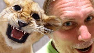 BABY LION RIPS MY HAIR OUT!!   BRIAN BARCZYK