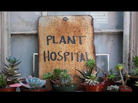 इस अस्पताल में होता है पौधो का इलाज