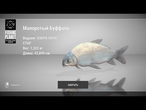 Fishing Planet - Как ловить Малоротого Буффало на озере Лоун Стар?