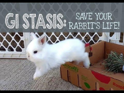 , title : 'GI Stasis: Save your Rabbit's Life!
