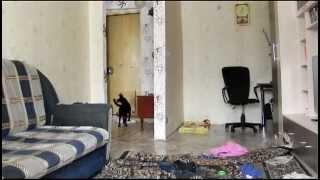 Смотреть онлайн Чем занимаются собаки, когда никого нет дома