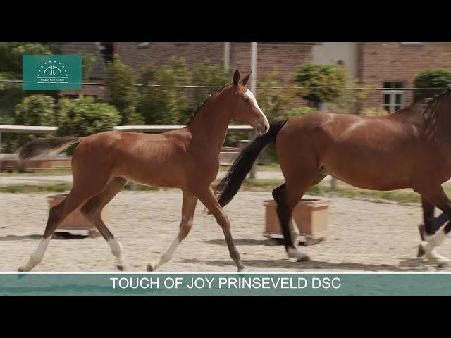 TOUCH OF JOY PRINSEVELD DSC