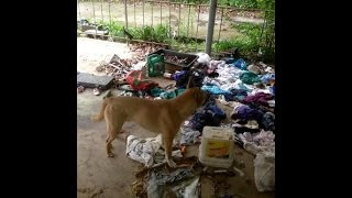 Story of a Abandoned Dog , that will make you cry and happy.