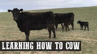How To Cow