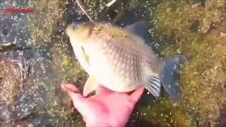 Супер рыбалка!!!вот это улов!смотреть всем!!!