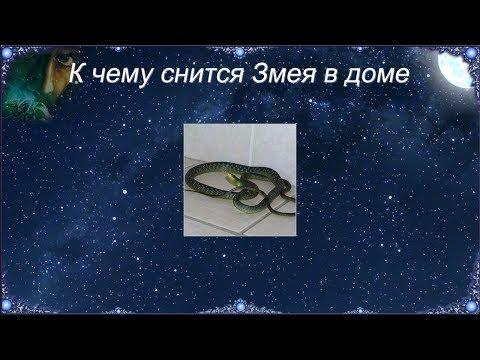 К чему снится Змея в доме (Сонник)