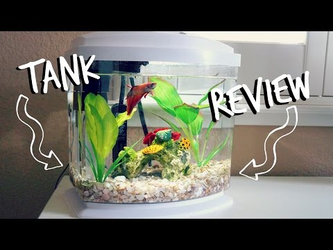 BETTA TANK REVIEW | AQUEON MINI BOW 2.5