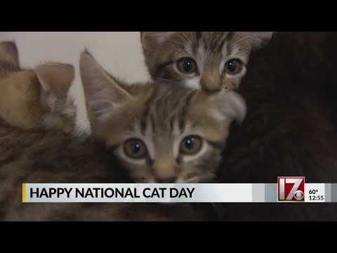Monday is National Cat Day