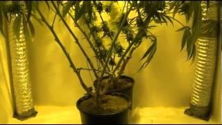 Indoor Closet Grow - Growing Marijuana Indoors