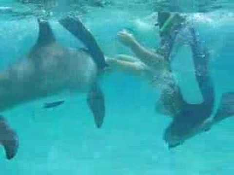 Dolphin Penis Video 2
