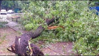 Юрист  Каждое упавшее на машину дерево принадлежит управляющей компании