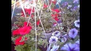Цветоводство. Тепличный цветочный домашний бизнес.