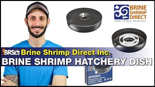 Hatch your own live saltwater fish food! Brine Shrimp Direct Hatchery Dish & BRS Brine Shrimp Eggs