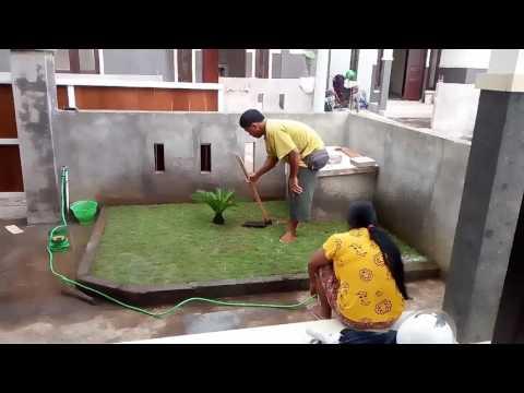 Video Tanam rumput jepang 4