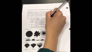 Bacterial Colony Morphology