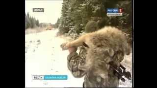 Волки пришли в Архангельск