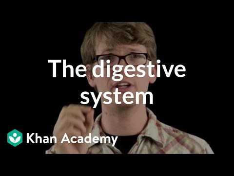 The digestive system (video) | Khan Academy
