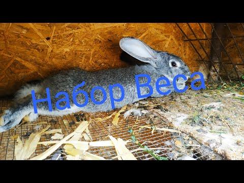 Как добиться быстрого роста у кролика //Жизнь в деревне!!!