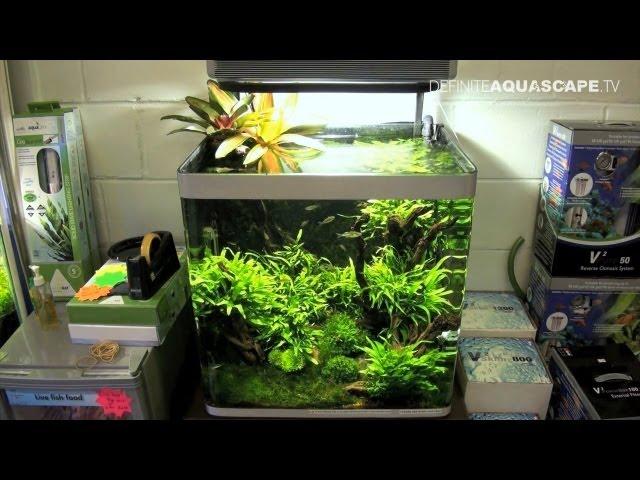 Aquascaping - Aquarium Ideas from Aquatics Live 2011, part 2