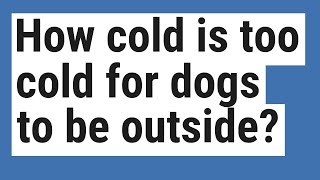 How cold is too cold for dogs to be outside?