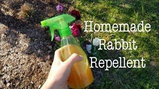 Homemade Rabbit Repellent 🐰🦌