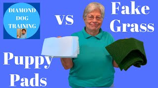 Puppy Pads vs Fake Grass For Indoor Potty Training/ Which Is Best for Your Dog/ Italian Greyhounds