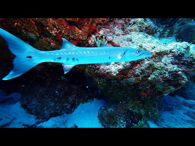 Best Scuba Diving in the World, Cozumel, Mexico: Yellow House Reef (GoPro HD-1080p)
