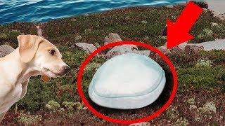 Если вы Увидите Такое на Пляже, Держите Свою Собаку Подальше!