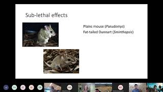 The role of toxoplasmosis in mammal declines in northern and southern Australia