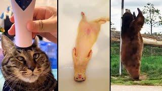 animales  relajación total