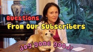 Important Dog Questions From Subscribers - Mail Bag Time! - Dog Gone Good
