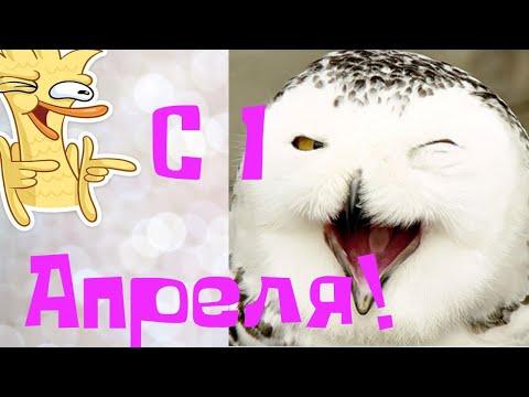 Веселое поздравление с 1 АПРЕЛЯ!С днем смеха!\\A fun day of laughter!From 1 April!