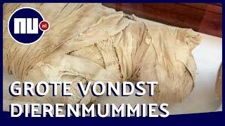 Dierenmummies getoond in Egypte: honderden dieren gevonden | NU.nl