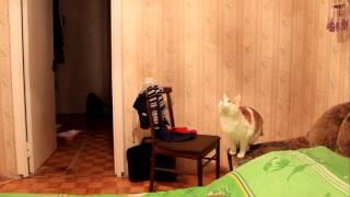 кот и люстра